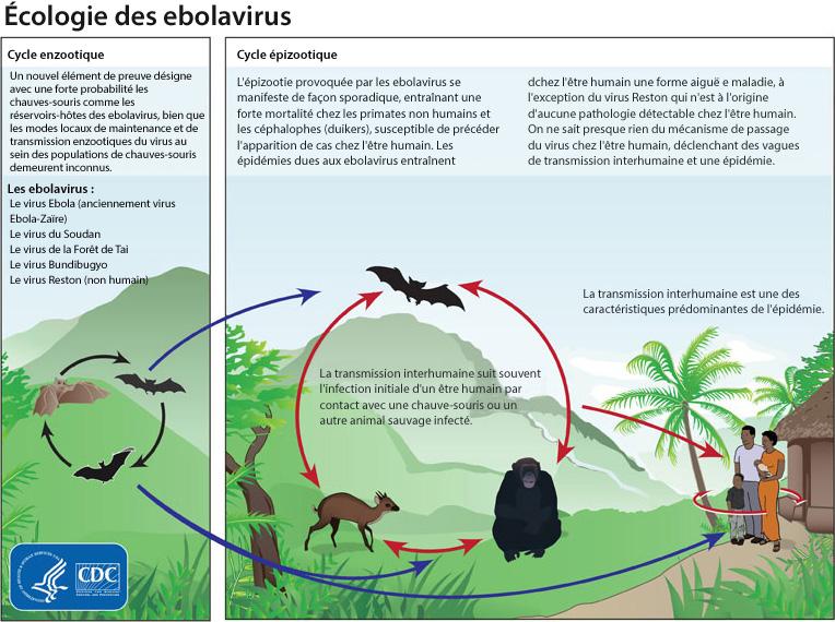 EBOLA_ecology_FR